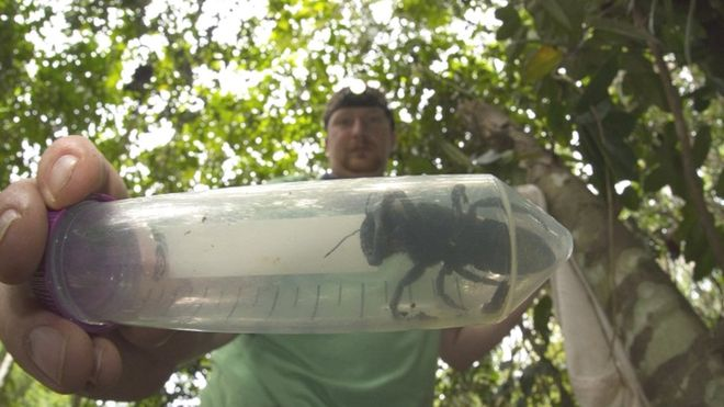 Clay Bolt found and photographed the world's biggest bee alive
